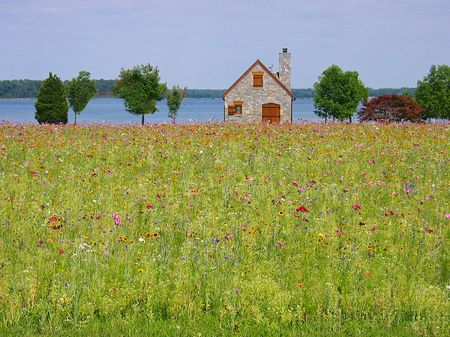 Stone Cottage in a field of wild flowers